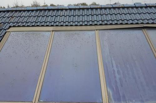 Solaranlage mit Flechtenbefall - vor der Reinigung